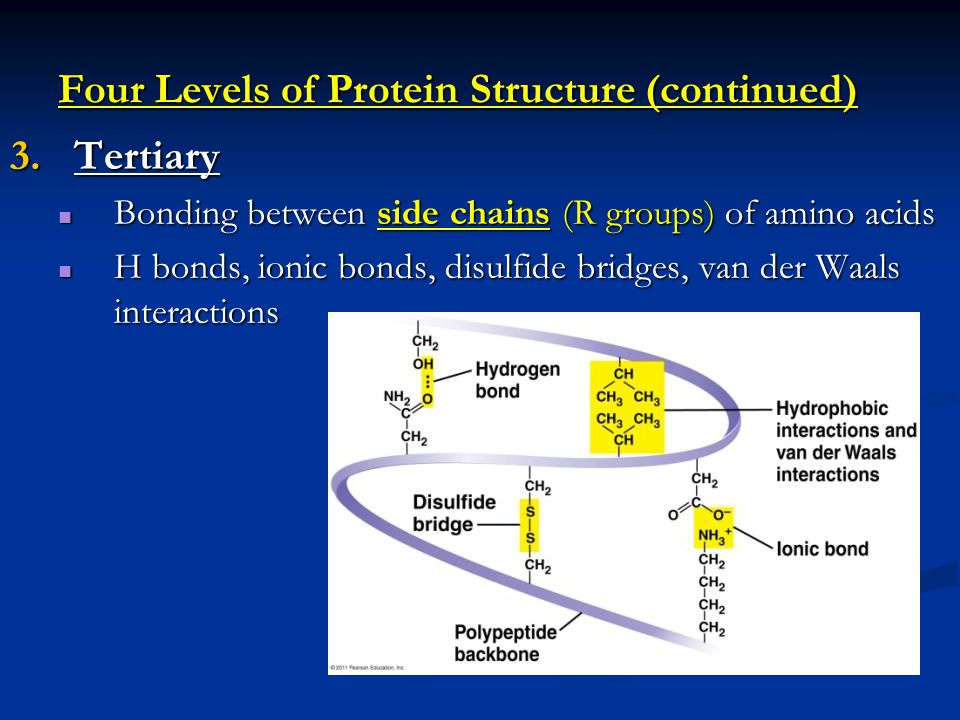 Four Levels of Protein Structure (continued)
