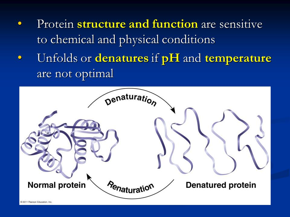 Protein structure and function are sensitive to chemical and physical conditions