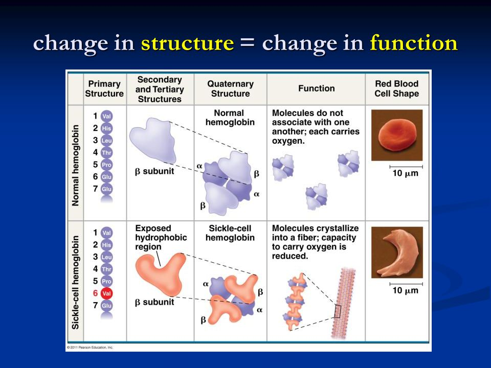 change in structure = change in function