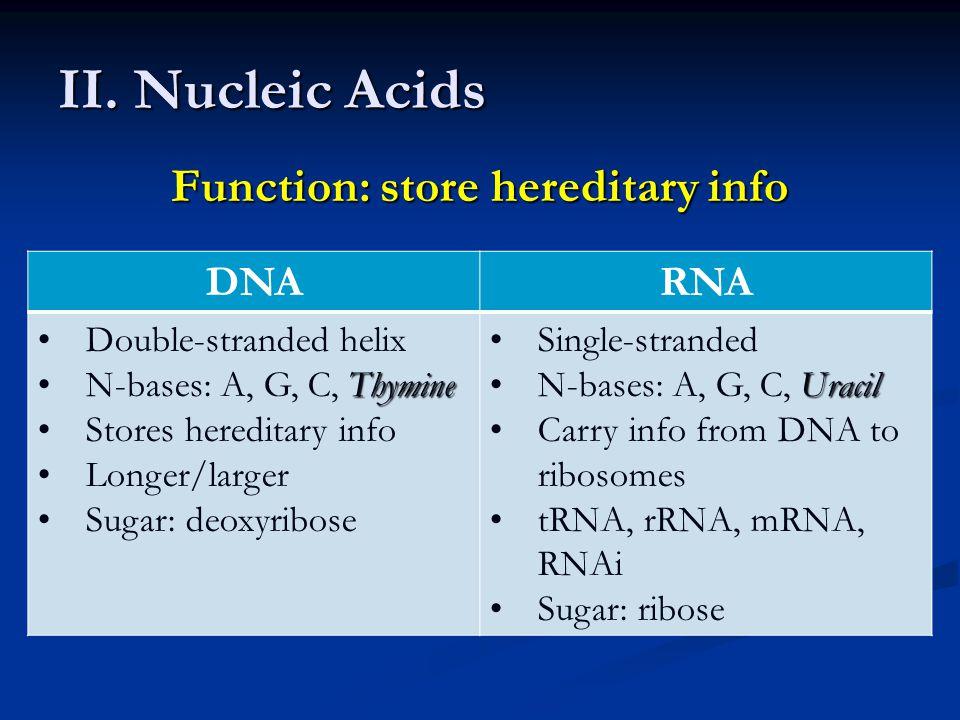 Function: store hereditary info