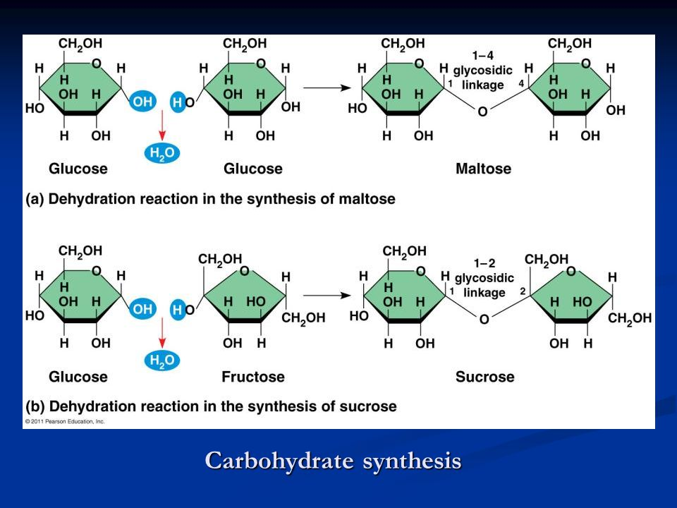 Carbohydrate synthesis
