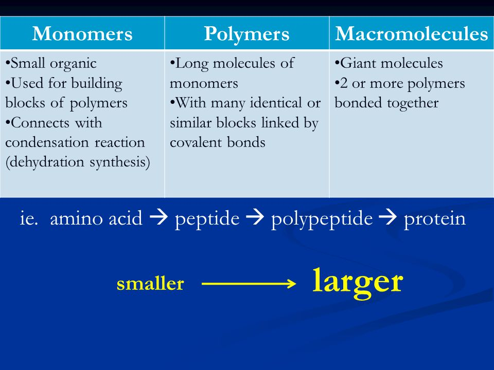 ie. amino acid  peptide  polypeptide  protein