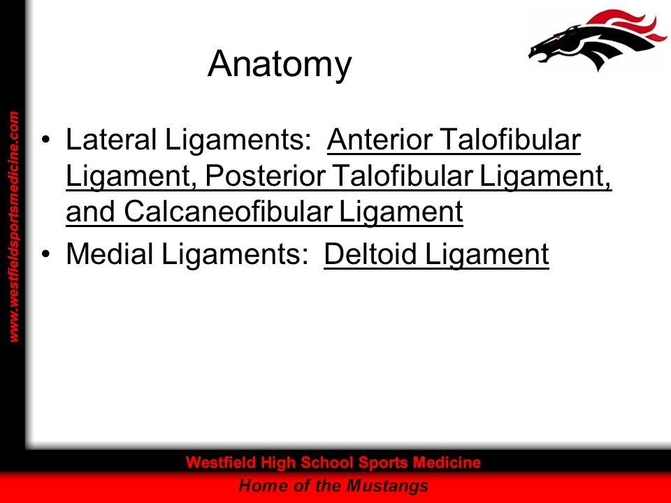 Anatomy Lateral Ligaments: Anterior Talofibular Ligament, Posterior Talofibular Ligament, and Calcaneofibular Ligament.