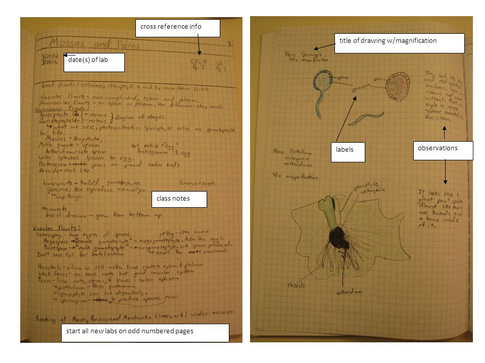 date(s) of lab cross reference info. class notes. title of drawing w/magnification. labels. observations.