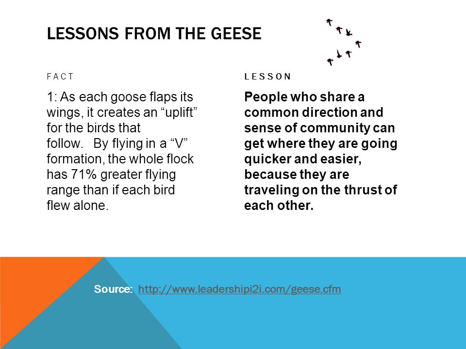 Lessons from the geese Fact. lesson.