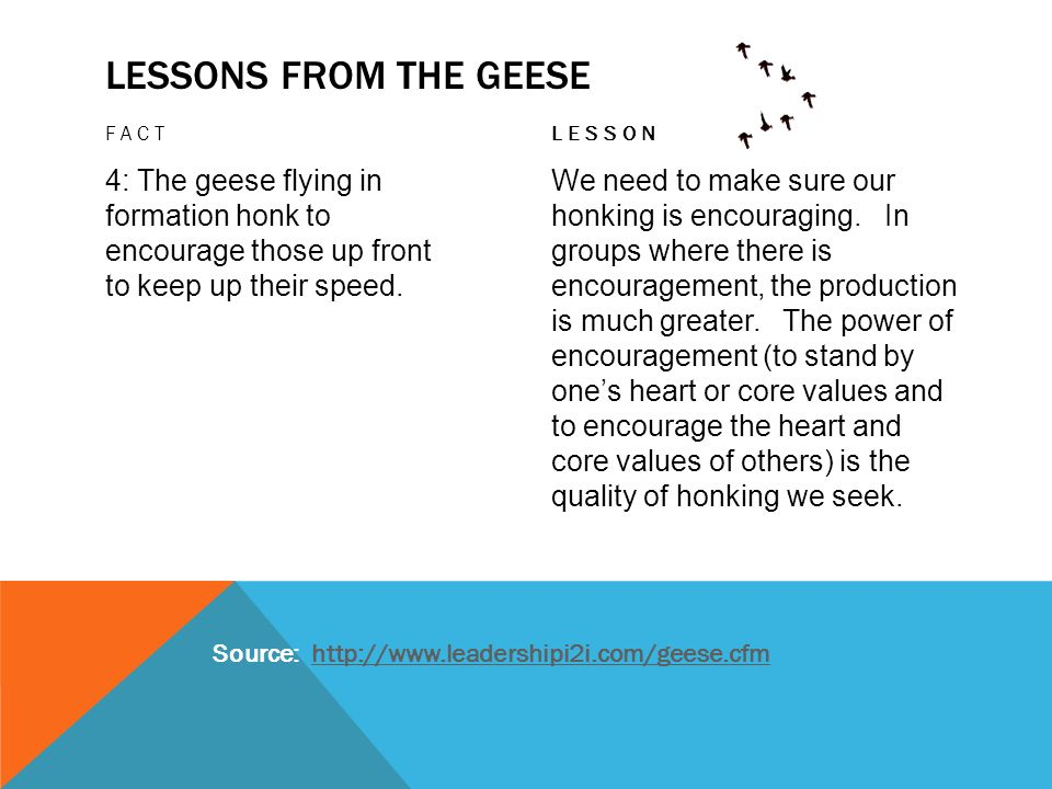 Lessons from the geese Fact. lesson. 4: The geese flying in formation honk to encourage those up front to keep up their speed.