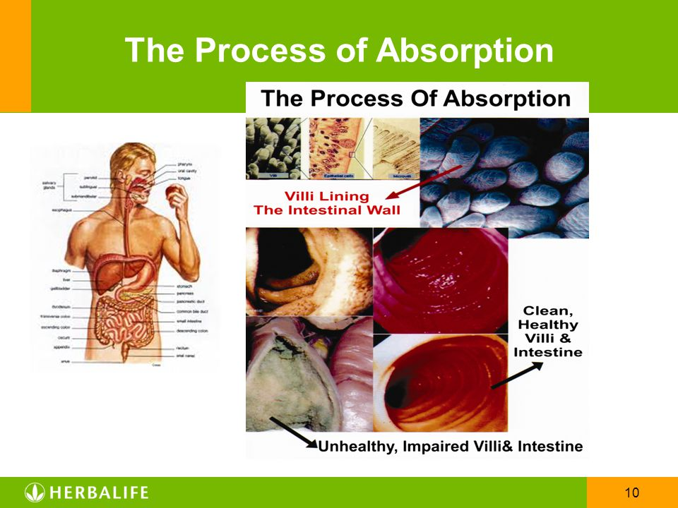 The Process of Absorption