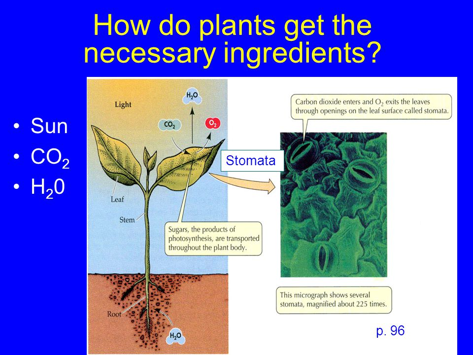 How do plants get the necessary ingredients