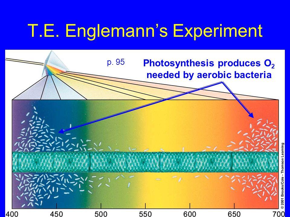 T.E. Englemann's Experiment