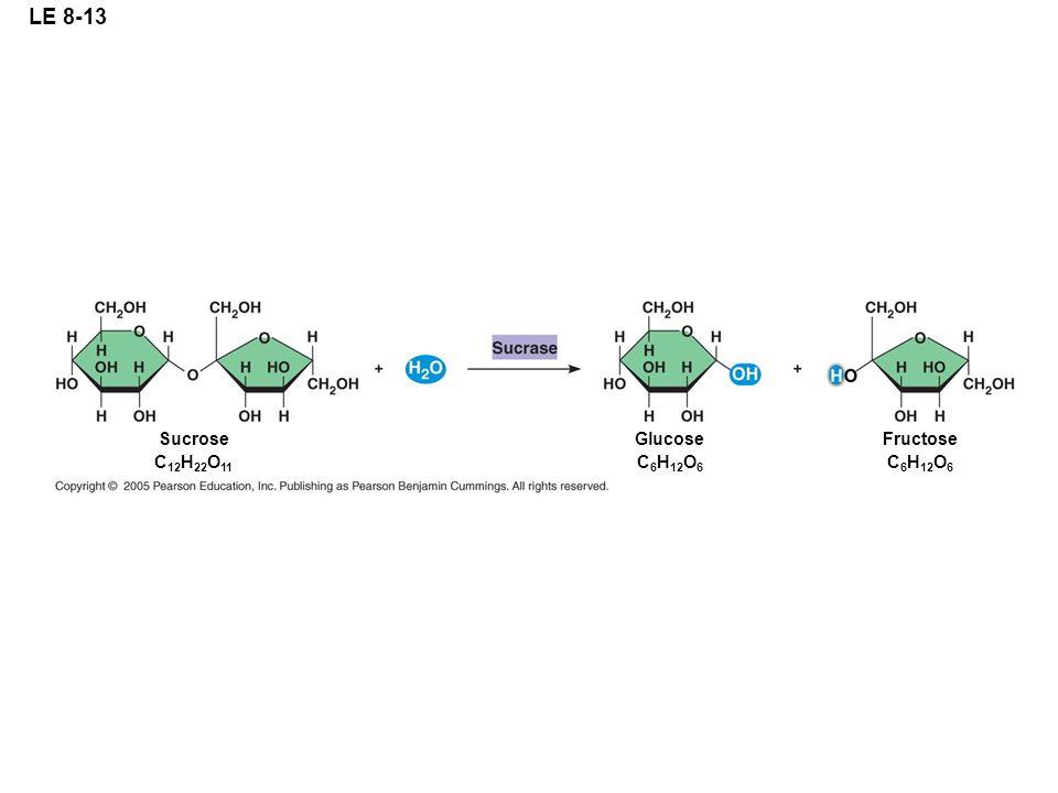 LE 8-13 Sucrose C12H22O11 Glucose C6H12O6 Fructose C6H12O6