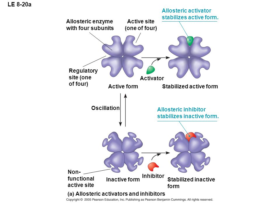 LE 8-20a Allosteric activator stabilizes active form.