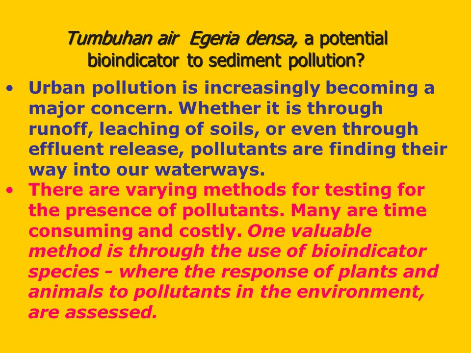 Tumbuhan air Egeria densa, a potential bioindicator to sediment pollution