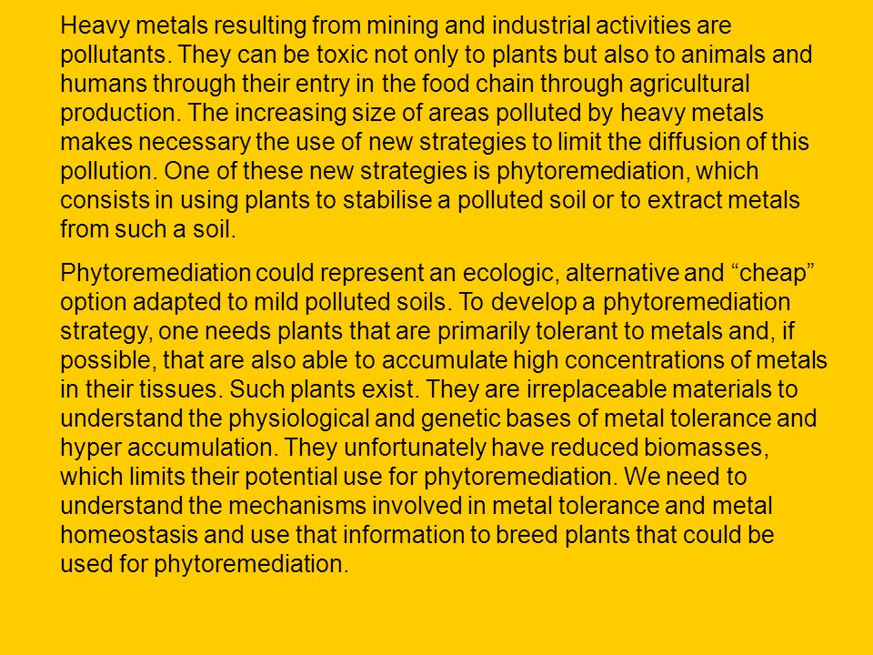 Heavy metals resulting from mining and industrial activities are pollutants. They can be toxic not only to plants but also to animals and humans through their entry in the food chain through agricultural production. The increasing size of areas polluted by heavy metals makes necessary the use of new strategies to limit the diffusion of this pollution. One of these new strategies is phytoremediation, which consists in using plants to stabilise a polluted soil or to extract metals from such a soil.