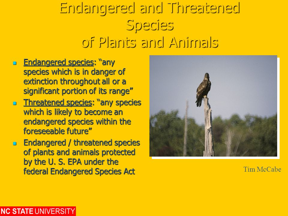 Endangered and Threatened Species of Plants and Animals