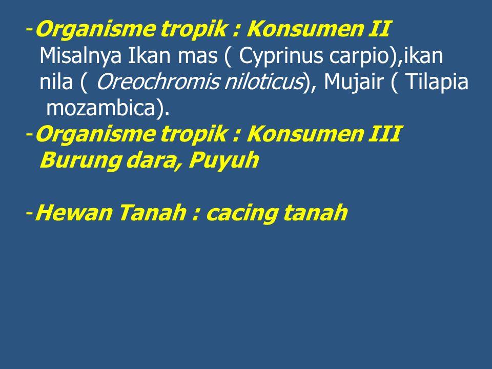 Organisme tropik : Konsumen II
