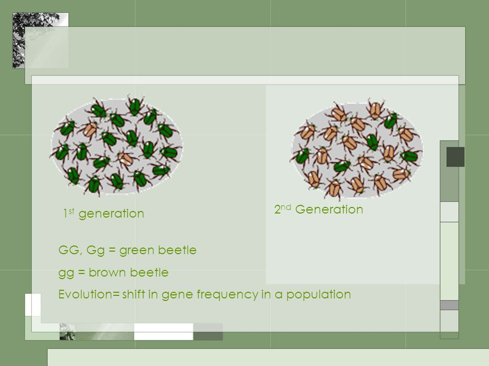 2nd Generation 1st generation. GG, Gg = green beetle.