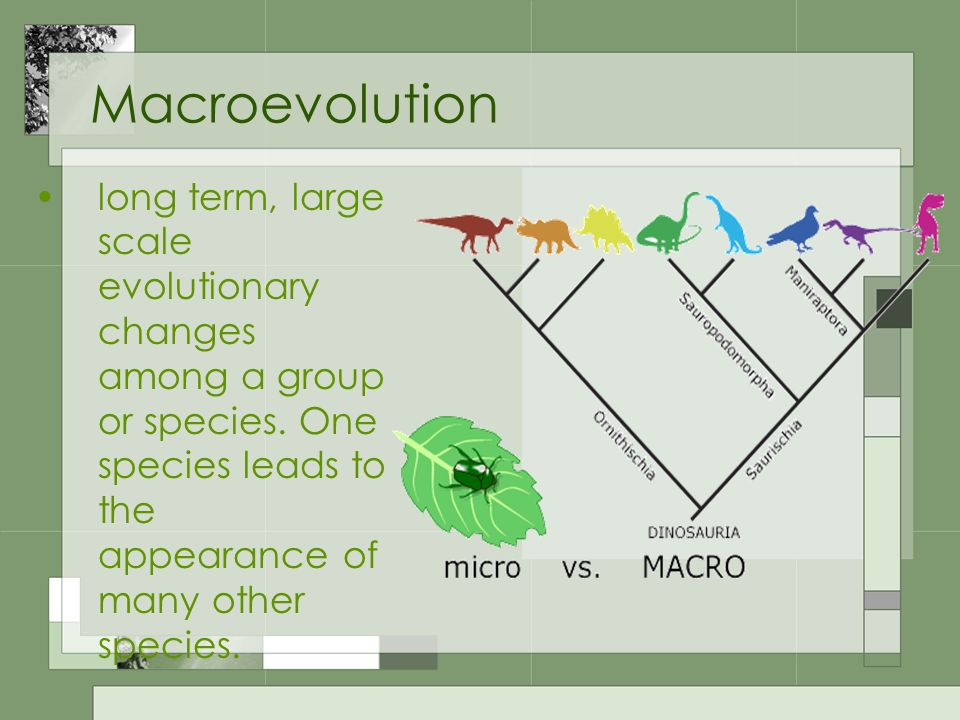 Macroevolution long term, large scale evolutionary changes among a group or species.