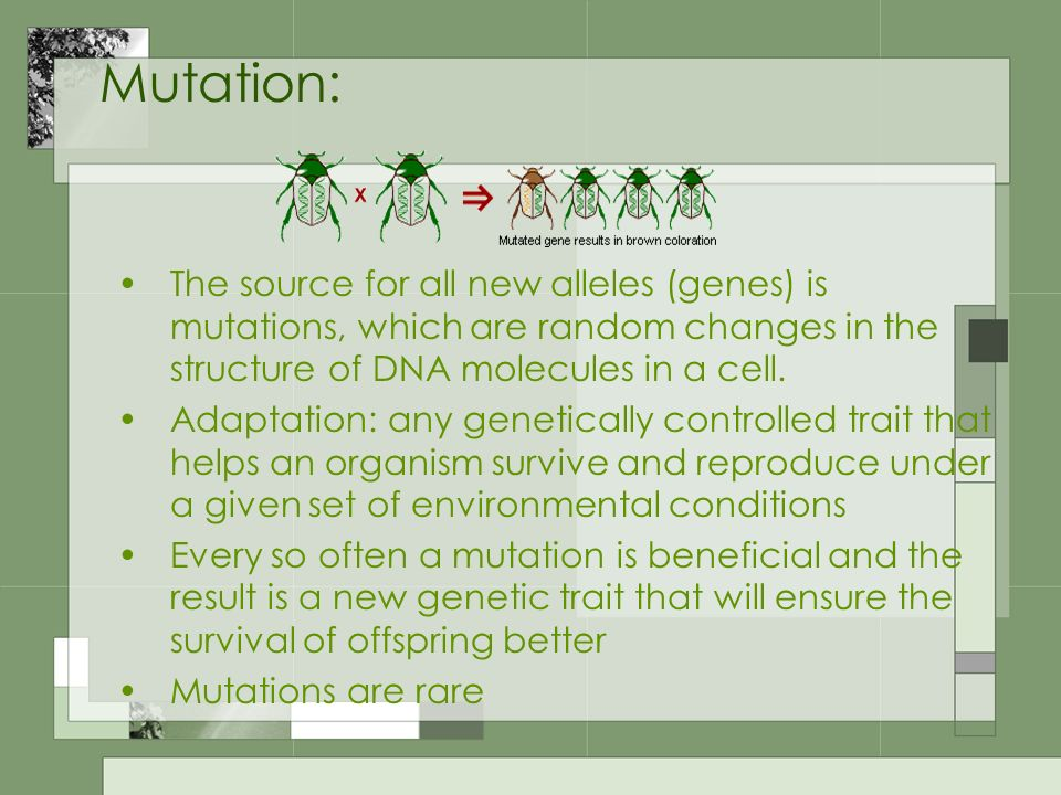 Mutation: The source for all new alleles (genes) is mutations, which are random changes in the structure of DNA molecules in a cell.