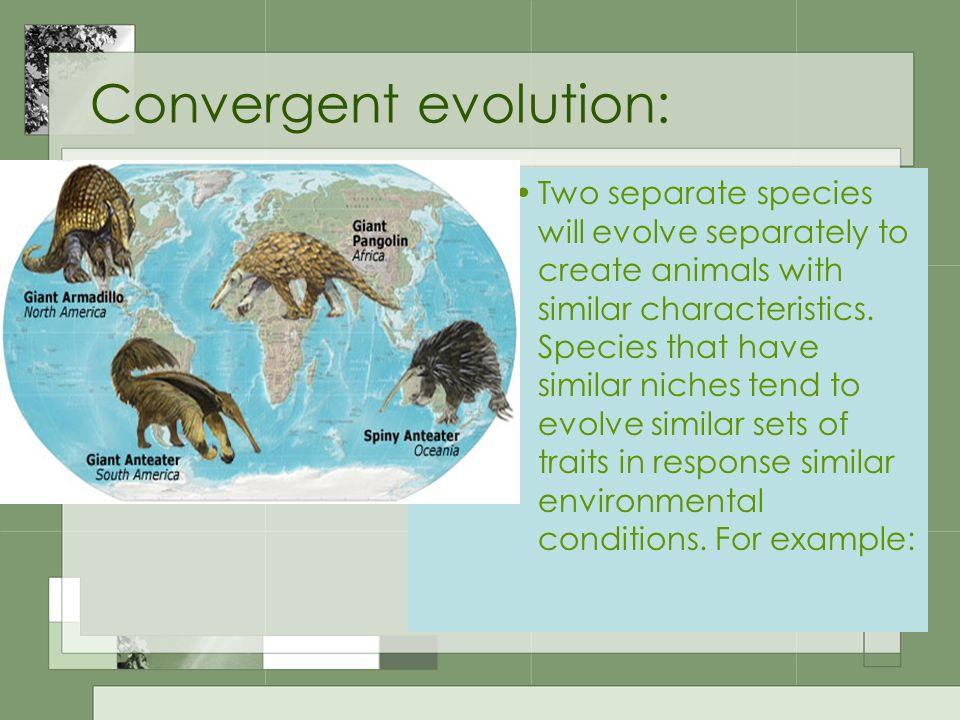 Convergent evolution: