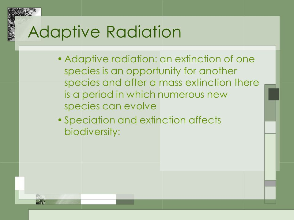 Adaptive Radiation