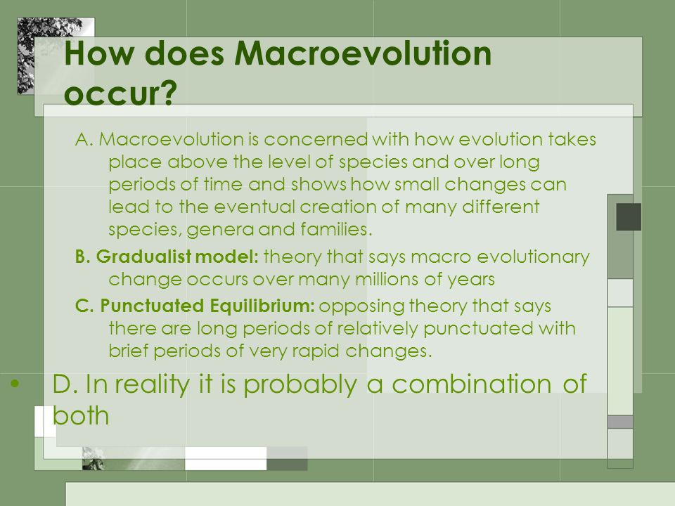 How does Macroevolution occur