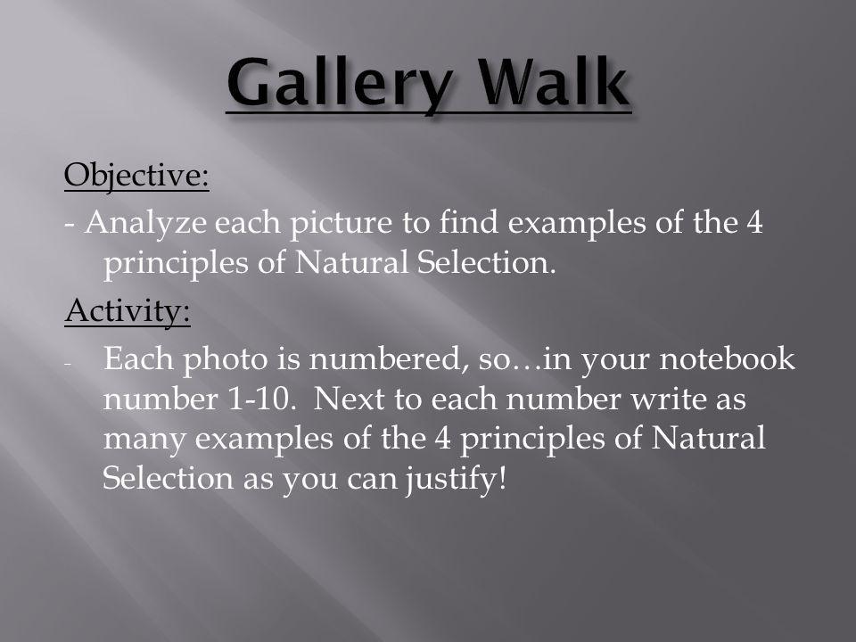 Gallery Walk Objective: