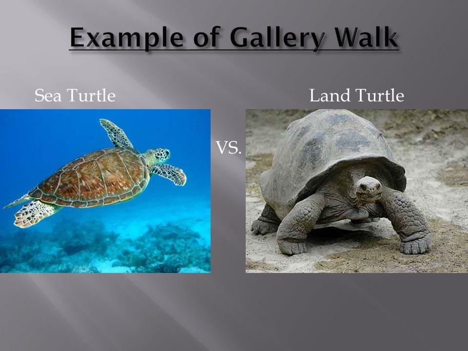 Example of Gallery Walk