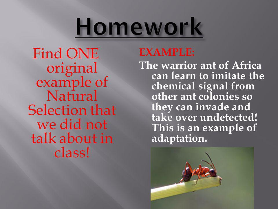 Homework Find ONE original example of Natural Selection that we did not talk about in class!