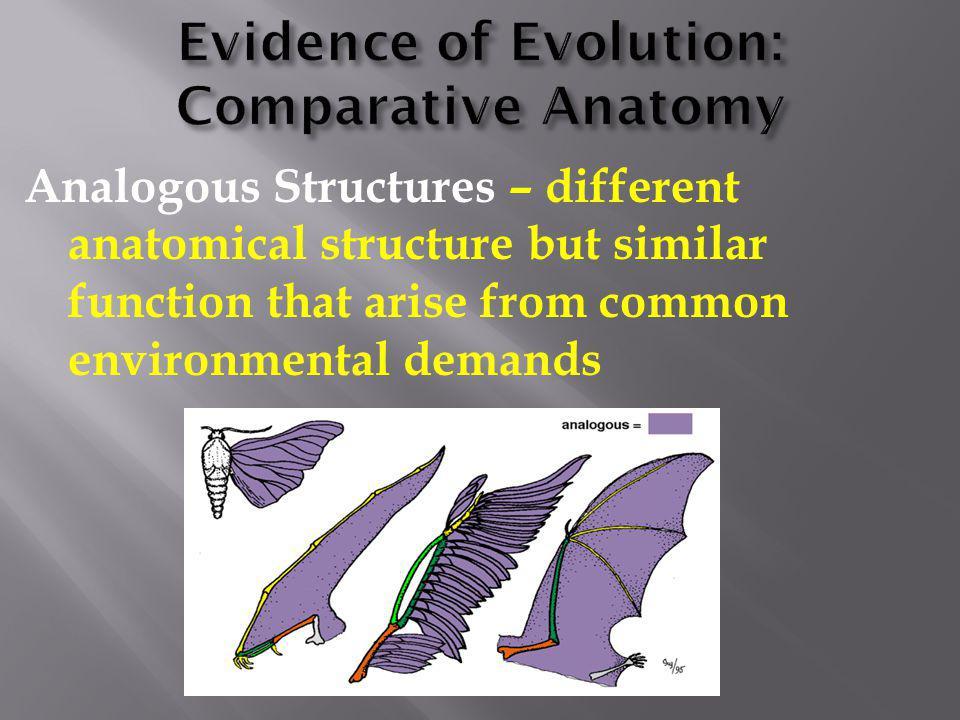 Evidence of Evolution: Comparative Anatomy