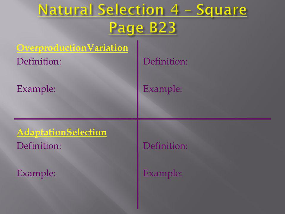 Natural Selection 4 – Square Page B23