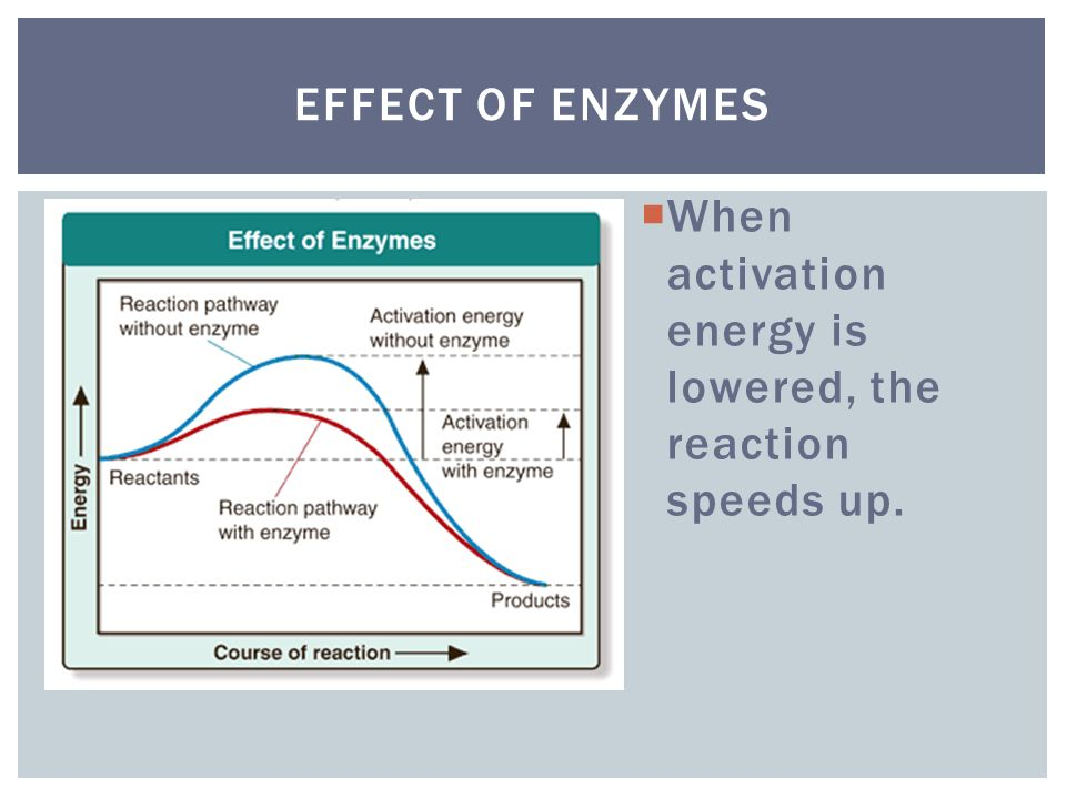 Effect of Enzymes When activation energy is lowered, the reaction speeds up.