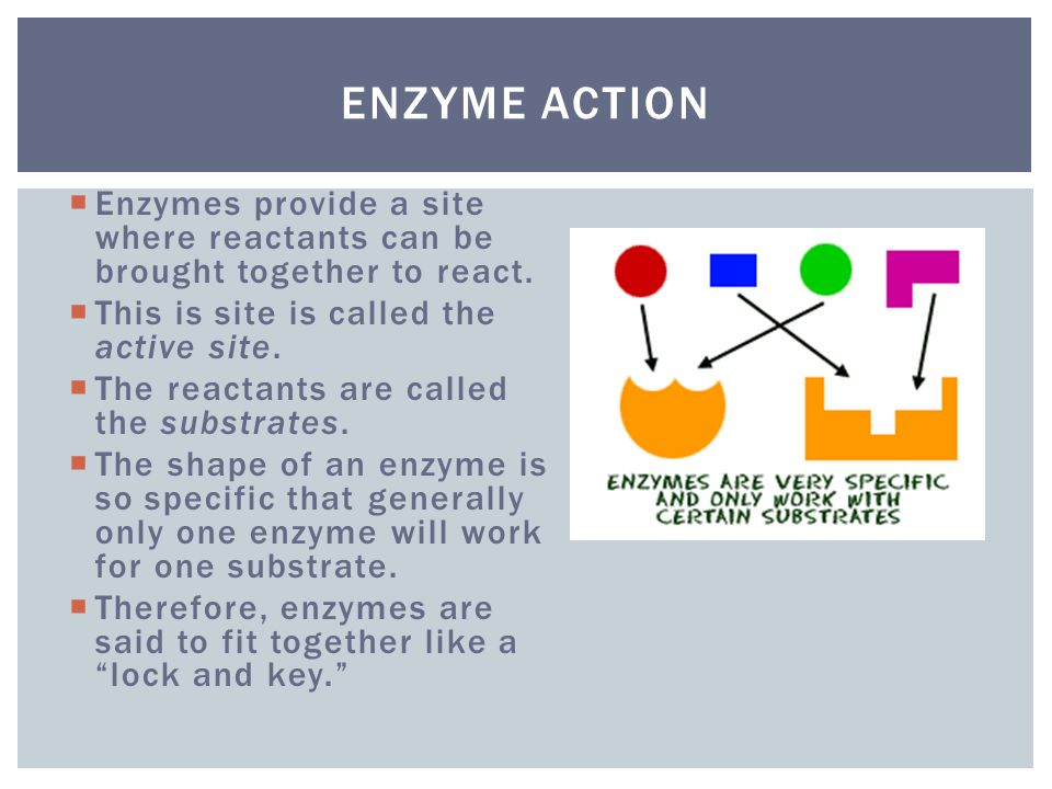 Enzyme Action Enzymes provide a site where reactants can be brought together to react. This is site is called the active site.