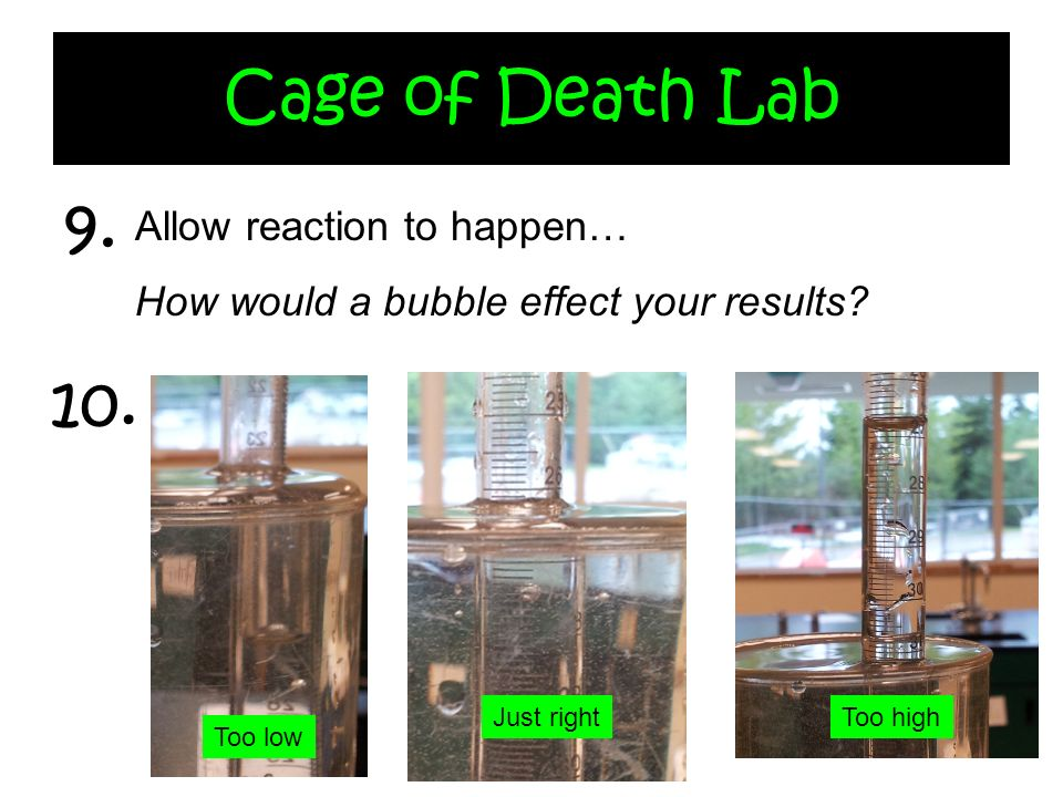 Cage of Death Lab 9. 10. Allow reaction to happen…