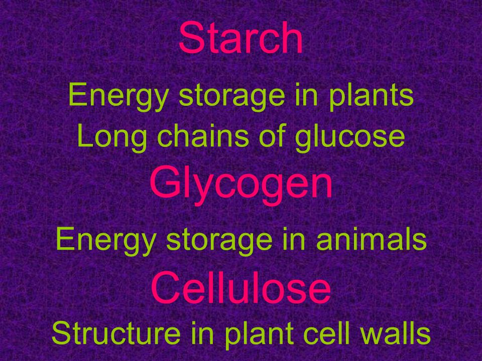 Starch Energy storage in plants Long chains of glucose Glycogen Energy storage in animals Cellulose Structure in plant cell walls