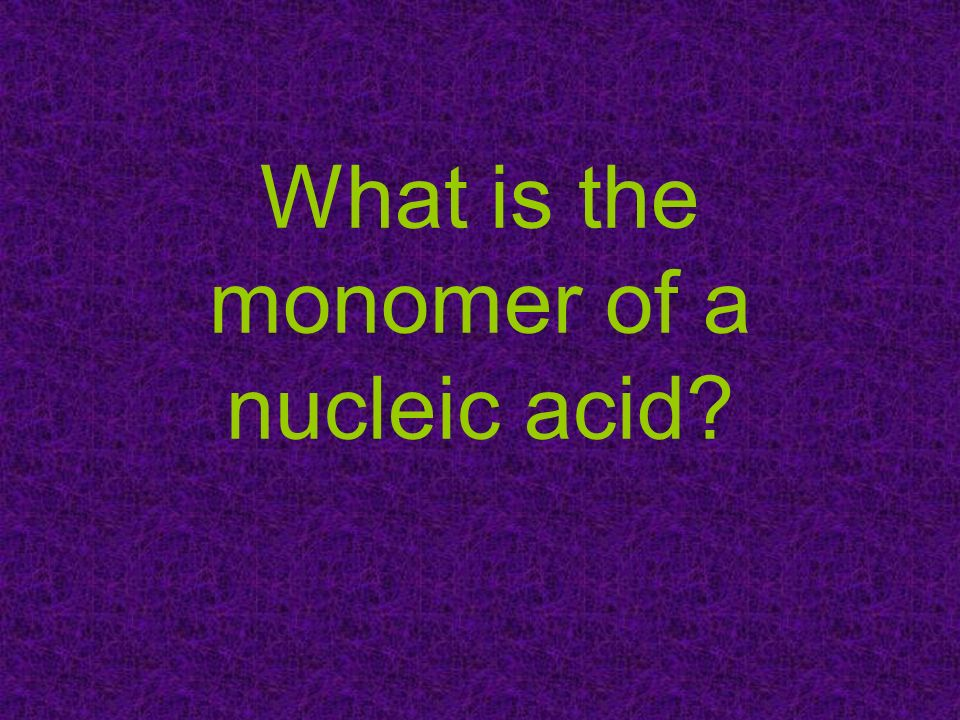 What is the monomer of a nucleic acid