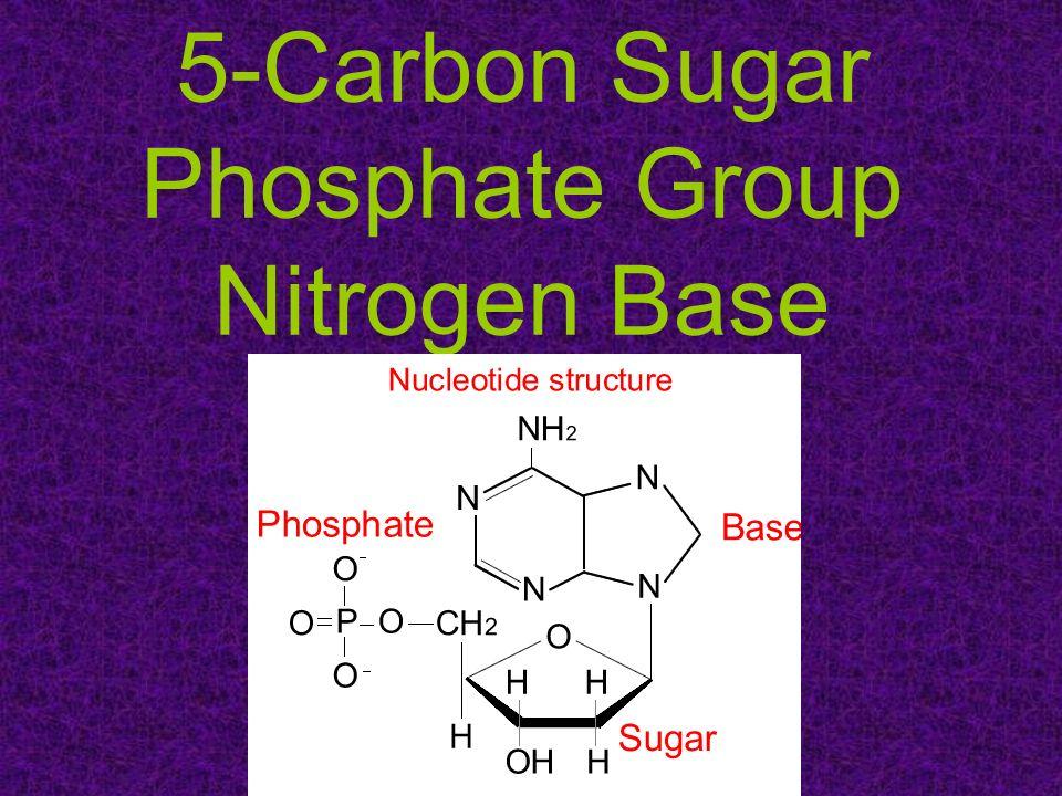 5-Carbon Sugar Phosphate Group Nitrogen Base