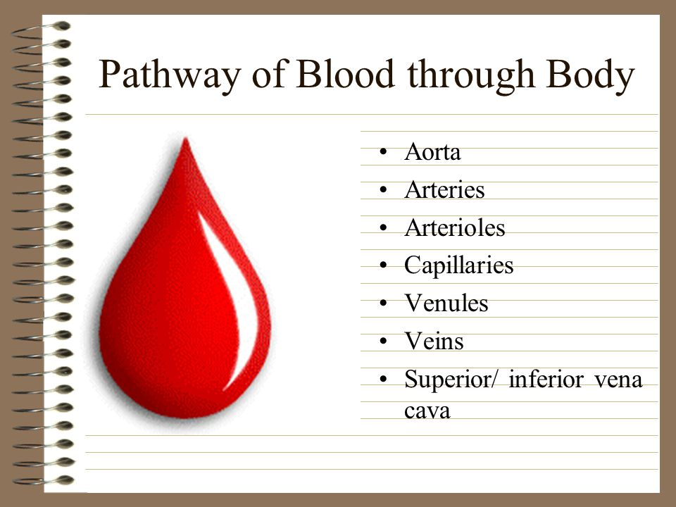 Pathway of Blood through Body