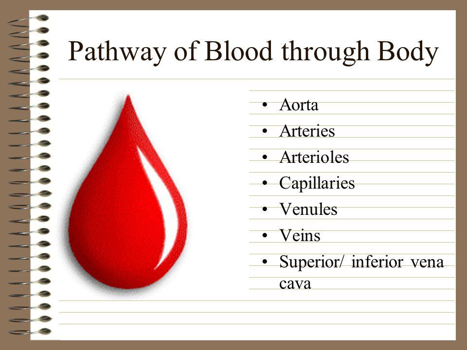 Pathway of Blood through Body