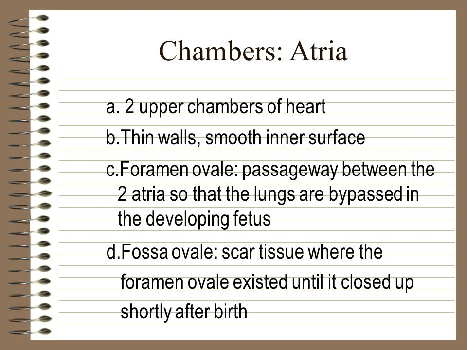 Chambers: Atria a. 2 upper chambers of heart