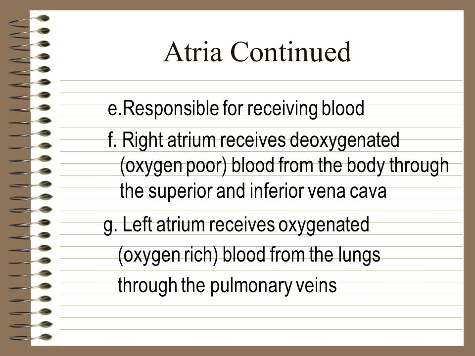 Atria Continued e.Responsible for receiving blood