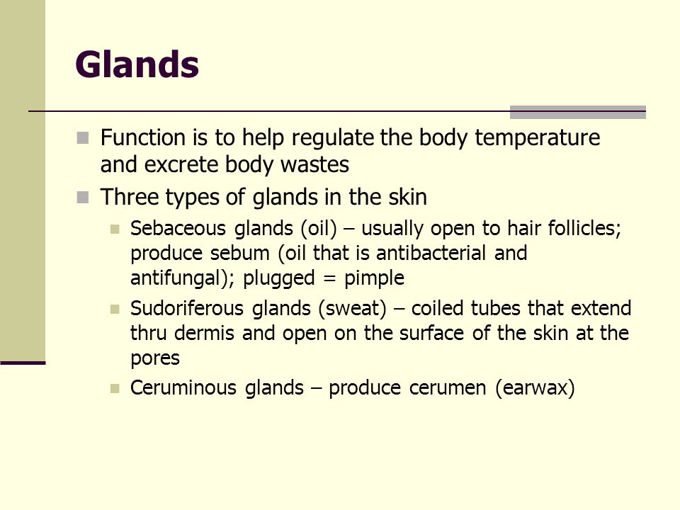 Glands Function is to help regulate the body temperature and excrete body wastes. Three types of glands in the skin.