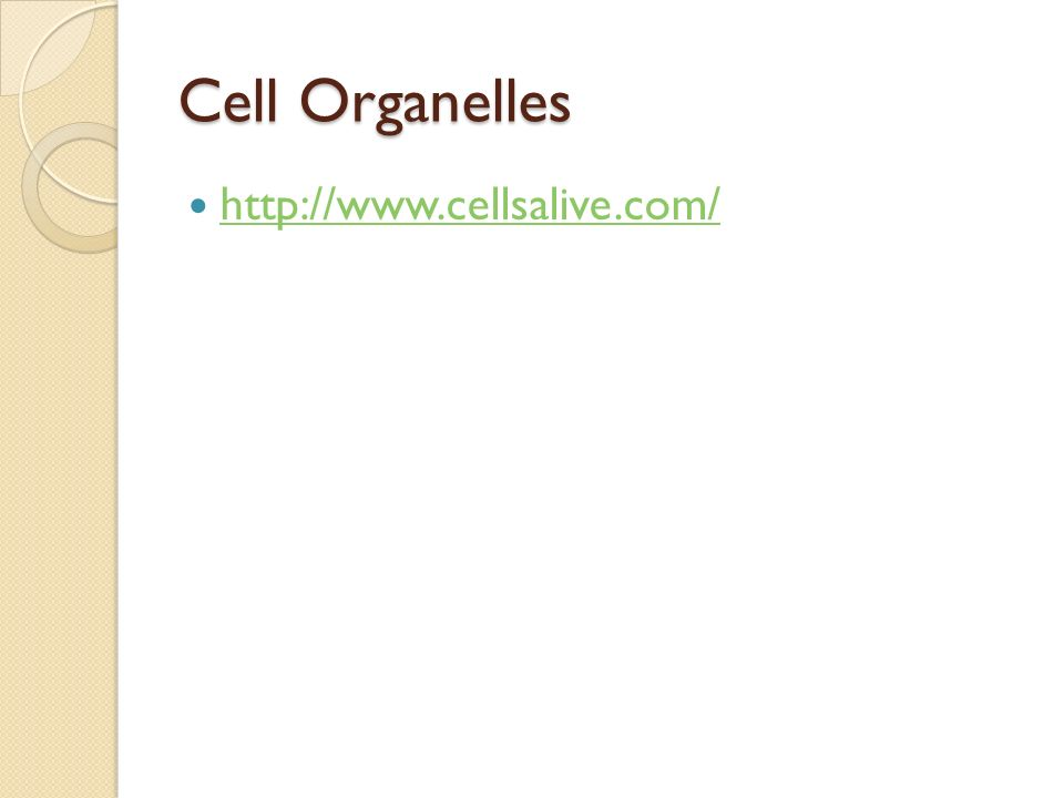 Cell Organelles http://www.cellsalive.com/