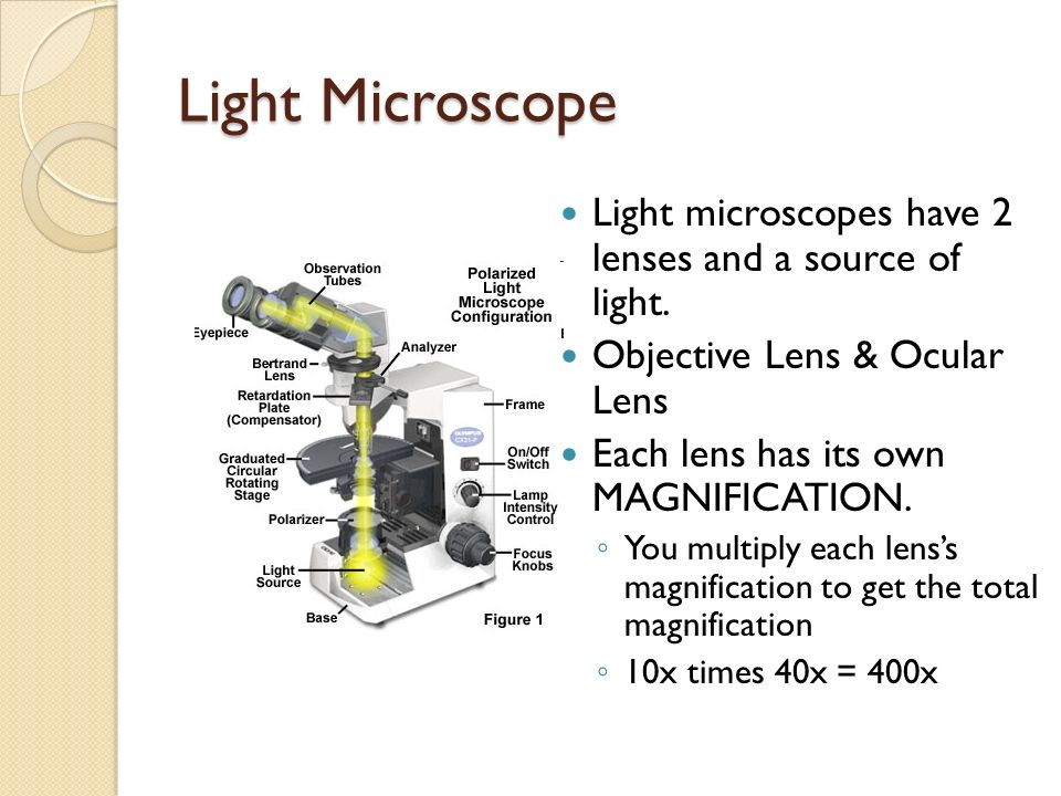 Light Microscope Light microscopes have 2 lenses and a source of light. Objective Lens & Ocular Lens.