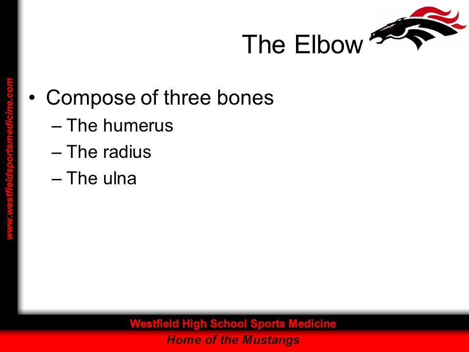 The Elbow Compose of three bones The humerus The radius The ulna