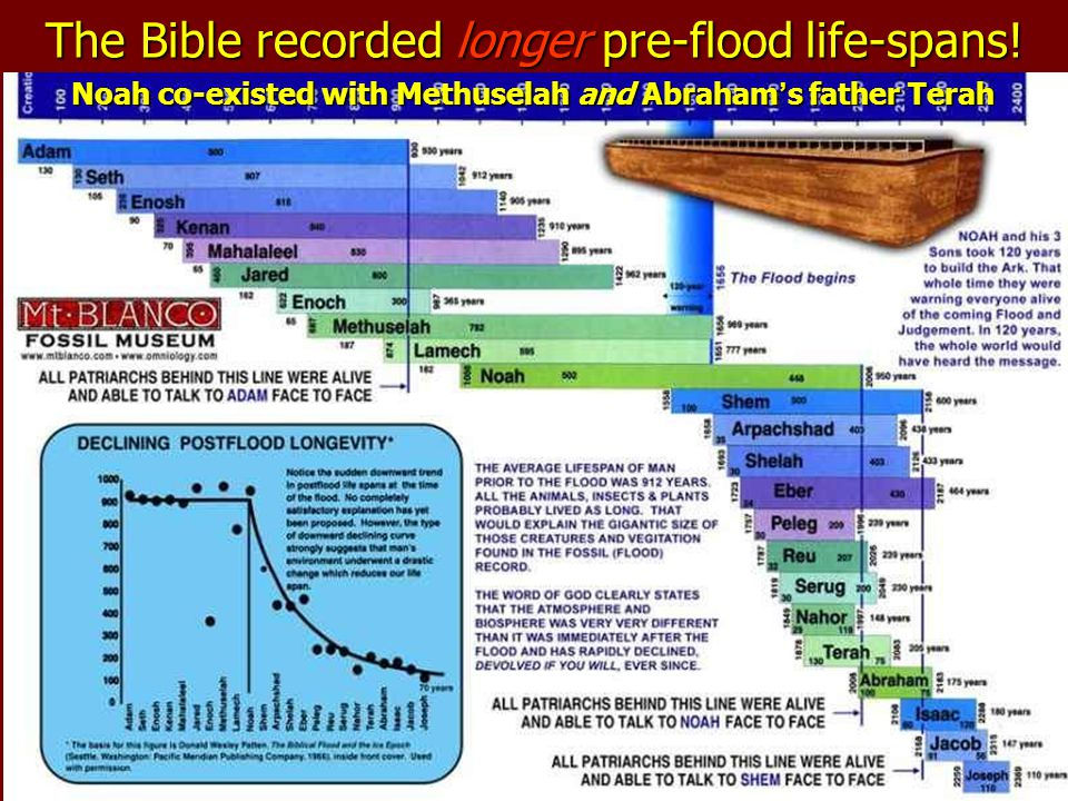 The Bible recorded longer pre-flood life-spans!