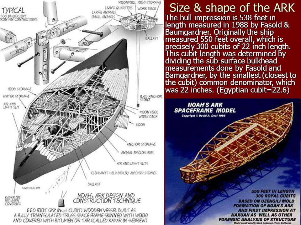 Size & shape of the ARK