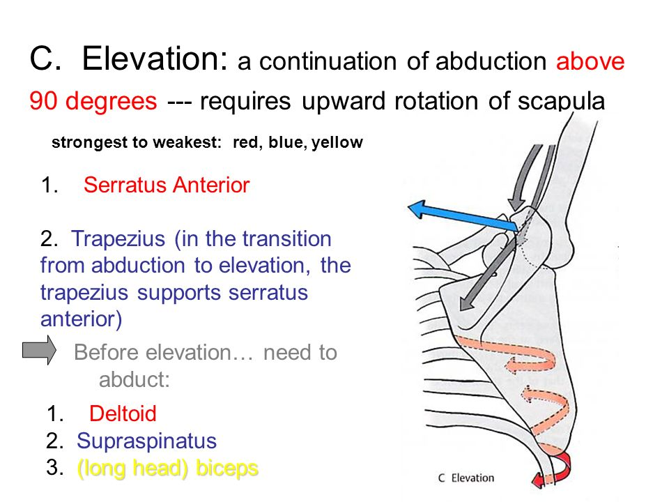 C. Elevation: a continuation of abduction above 90 degrees --- requires upward rotation of scapula