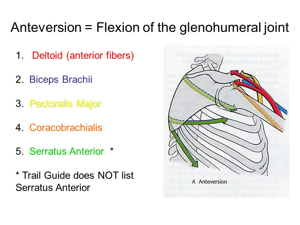 Anteversion = Flexion of the glenohumeral joint