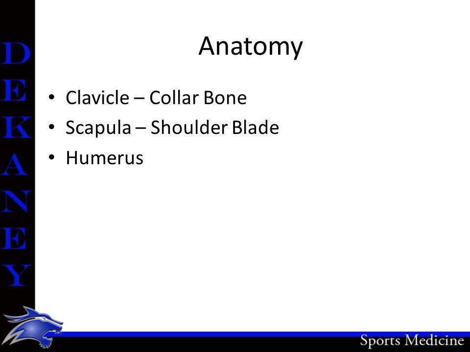 Anatomy Clavicle – Collar Bone Scapula – Shoulder Blade Humerus