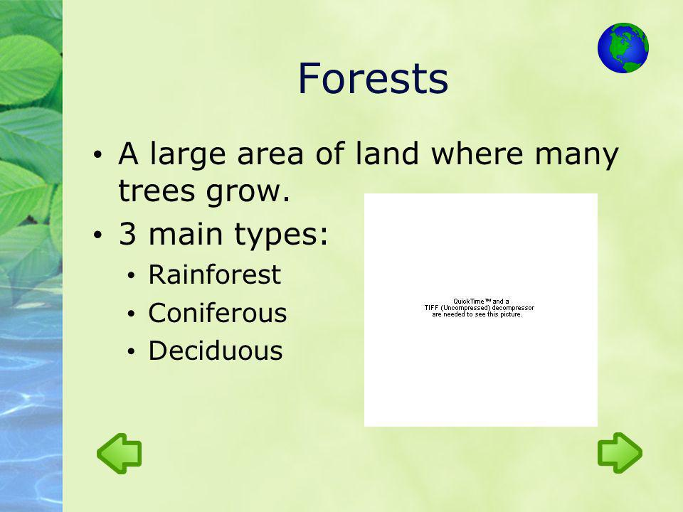 Forests A large area of land where many trees grow. 3 main types:
